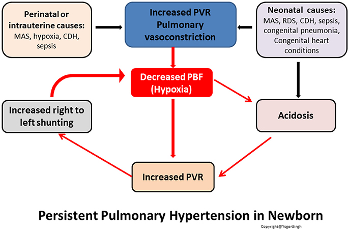 Frontiers Echocardiographic Evaluation of Transitional Circulation