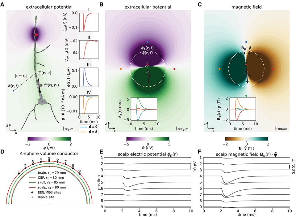 Frontiers Multimodal Modeling of Neural Network Activity
