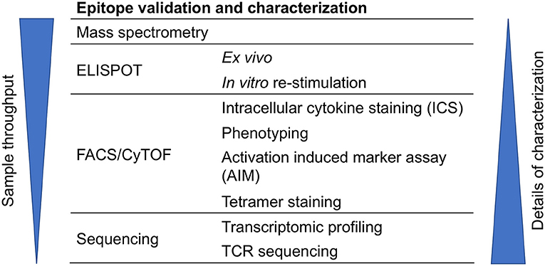 Frontiers A Review on T Cell Epitopes Identified Using Prediction