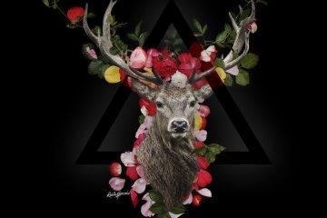 Jekk_Roses