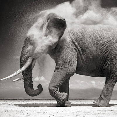 Elephant Dust - Nick Brandt