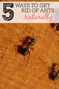 Ways To Get Rid Of Ants Naturally - Frugally Blonde