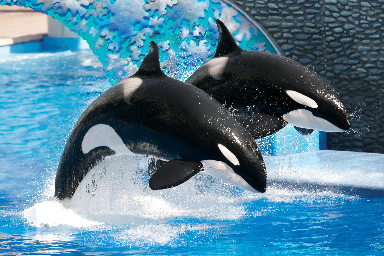 Into The Wild Quotes Wallpaper Killer Whales Seaworld