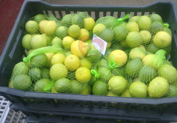 Lime Fresh from Egypt