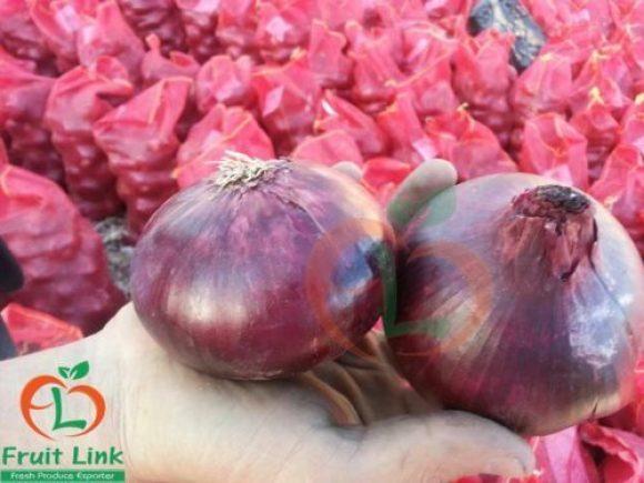 Red Onions, 25 kg mash bag   FruitLink