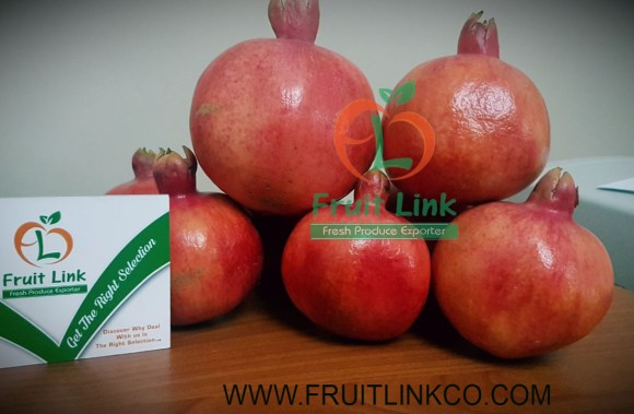 Egyptian Pomegranates early 116 by Fruit Link (13)