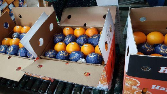 Valencia Oranges | Carton Packaging | Fruit Link