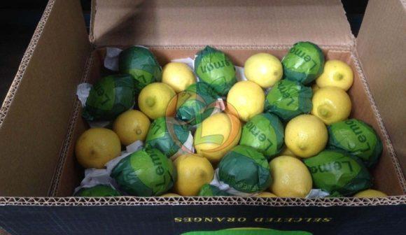 Yellow Lemon Variety | Carton Pack | Fruit Link
