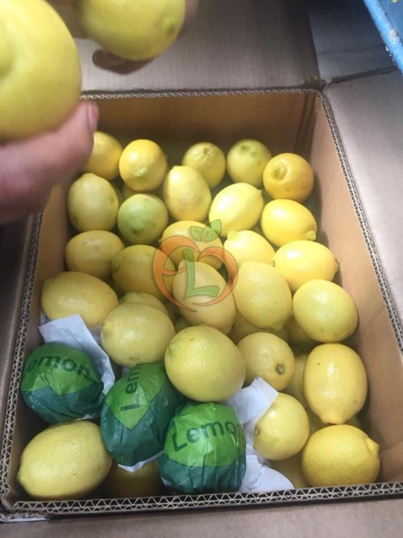 The best quality of Egyptian Lemons ready for export by Fruit Link