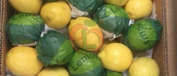 5. New season of Egyptian lemon, discover the unique Egyptian taste with fruit link.