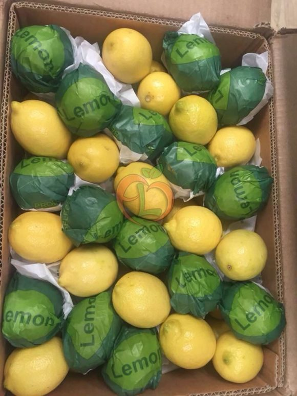 The best quality of Egyptian Lemons by Fruit Link