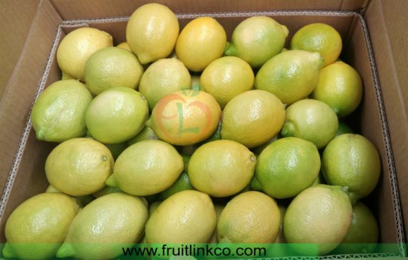 Lemons best quality from Egypt by Fruit link