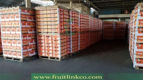 Baladi Oranges | Carton Packaging | preparing containers | Fruit Link