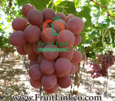Red Globe Grapes by Fruit Link