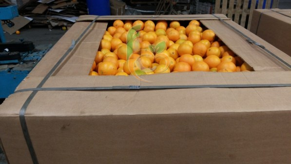 Orange for Juice Bins Jumbo box (9)