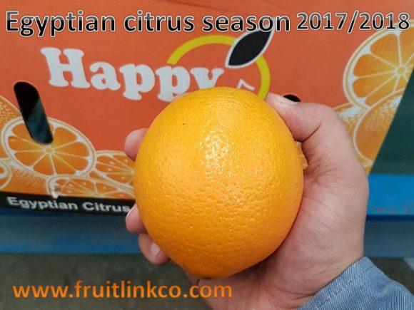 Navel Oranges | citrus season 2017 | Fruit Link