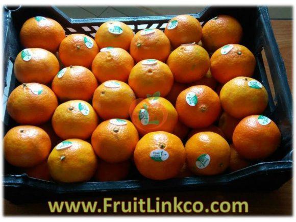 Egyptian Fremont fresh premium quality for export | Fruit Link