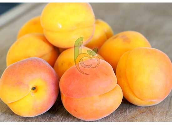 Apricot of Egypt