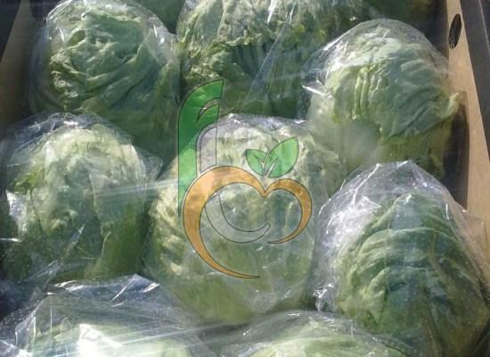 Egyptian Vegetables exporter