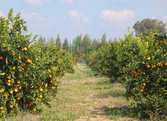 Fruit Link Farms