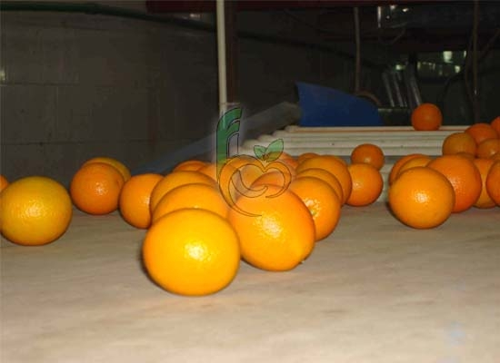 Citrus Packing house