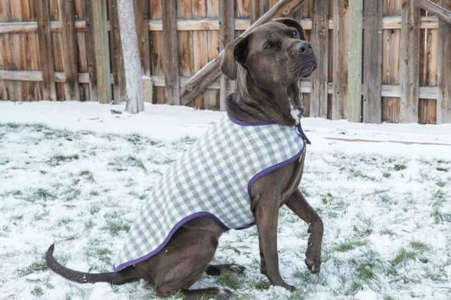 dog_coat_video_main