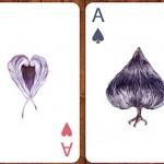 birdcards-6