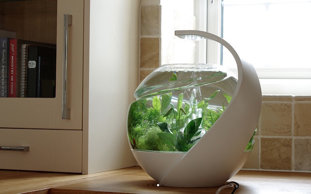Self Cleaning Fish Tank | INSPYER.ME