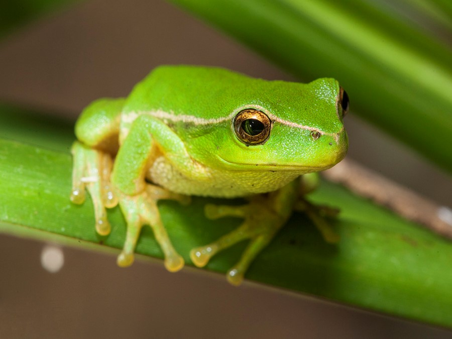 Cute Palm Tree Wallpaper Fuller Lab 187 Image Southern Leaf Green Tree Frog