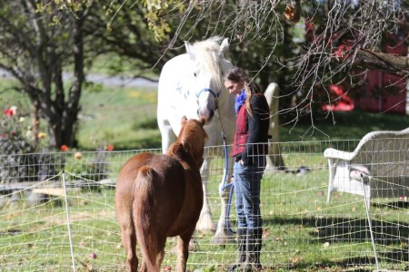 Chloe meeting Foxy from Blue Star Equiculture at the last Bedlam Farm Open House.  That's Pamela Rickenbach making the introductions.