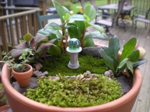 One of Fran's Mini Gardens