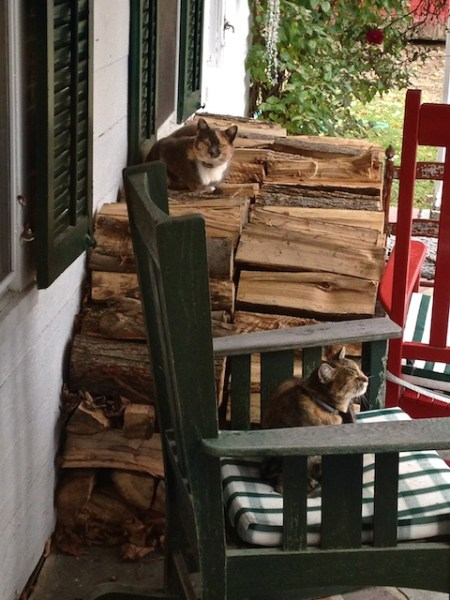 Flo and Minnie on the back porch