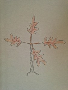 oak leaf dream