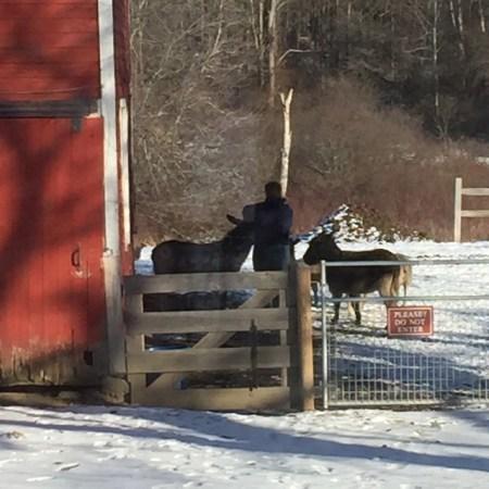 Deb feeding the animals