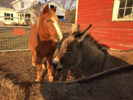 donks and pony