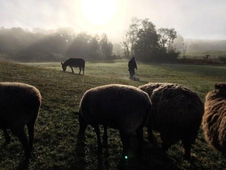 grazing-this-mornign