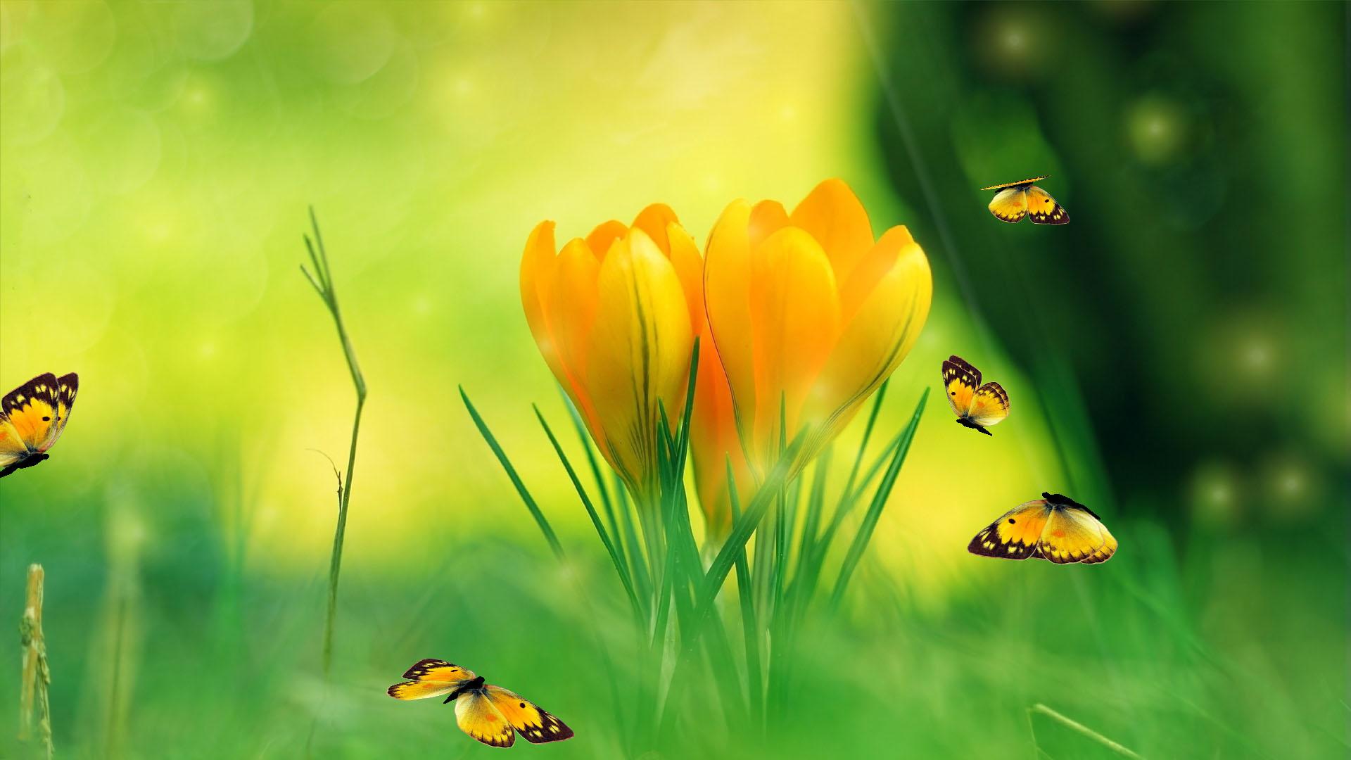 Animated Aquarium Wallpaper For Windows 7 Free Spring Charm Spring Screensaver Fullscreensavers Com