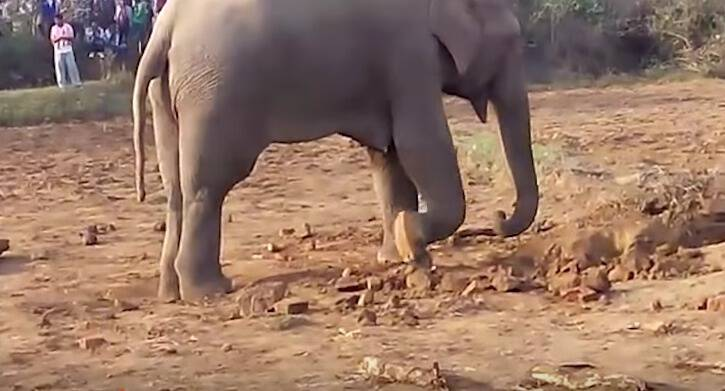 An Elephant's Journey Goes Awry