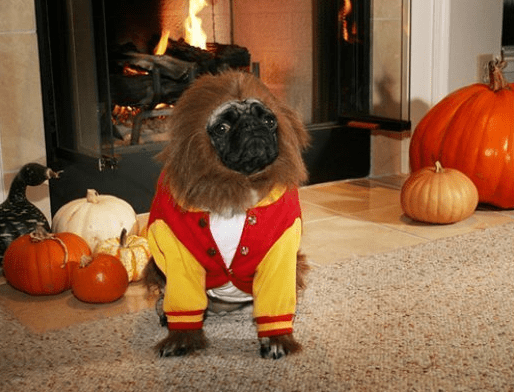 Cute Puppies Wallpapers For Mobile Pets Wearing Halloween Costumes 22 Photos Funcage