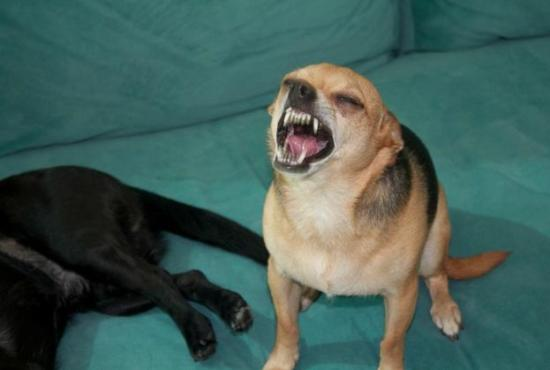 19 Dogs Caught Mid-Sneeze 016
