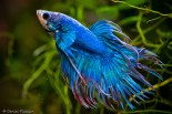 Freshwater Tropical Fish Species