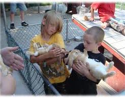 petting zoo rental los angeles kids party rent pony children's parties san jose san francisco sacramento