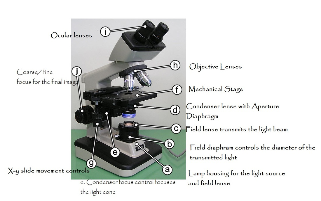 How To Assess A Microscope Condenser Lens Fungioz