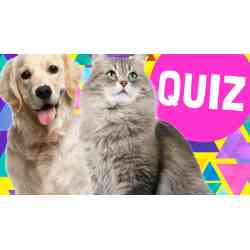 Small Crop Of What Dog Are You Quiz