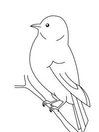 Bird Coloring Pages Preschool Bird Coloring Pages For Preschoolers
