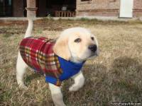 Puppy Sweater - funnypuppysite.com