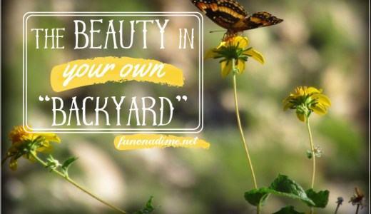Finding the Beauty in Your Own Backyard