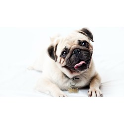 Perky Hindi 10 Ny Dog Quotes 1 Ny Dog Quotes Ny Dog Quotes bark post Funny Dog Quotes