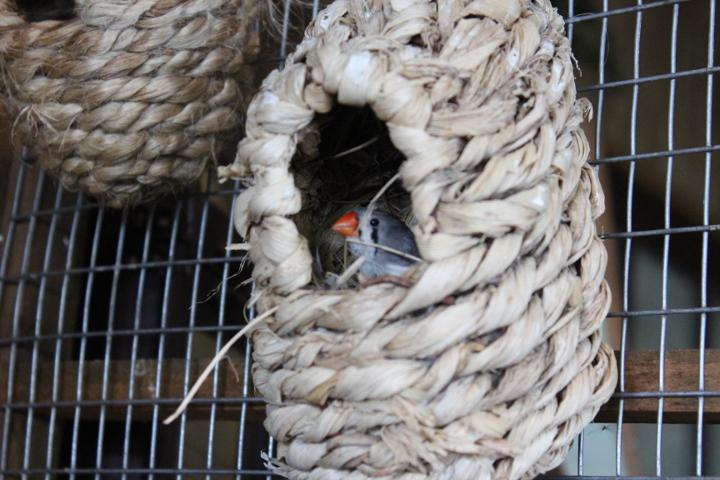 birdkingdom5