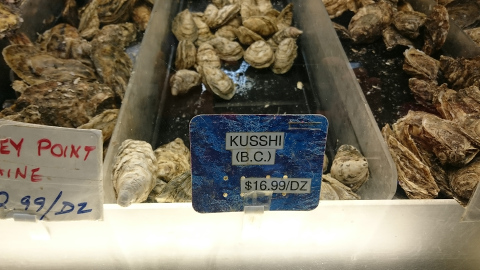kusshioyster